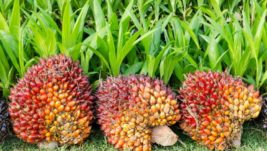 100 Years Annivesary Malaysian Oil Palm Industry