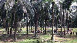 MPOB Codes Practice Oil Palm Estates